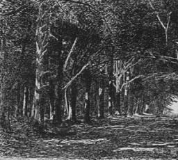 Railroad Heath woods